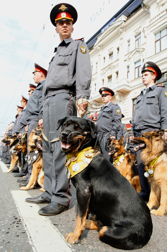 Rottweiler_russian_military