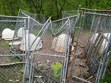 call it a puppy mill no wonder the authorities are wanting to shut ...