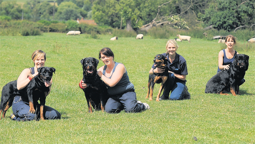 rottweiler-obedience-training