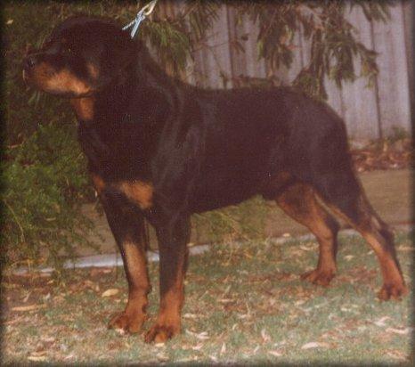 quik5